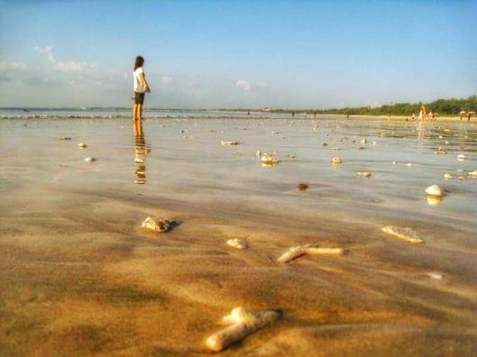 Natural seashell at kuta beach