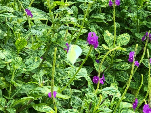 Animals of Singapore botanic gardens: can you spot the butterfly