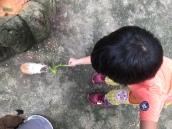 animal feeding at KL towers mini zoo
