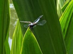 Animals of Singapore botanic gardens