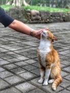 Cat at Zhongshan 4 lu (中山四路)chongqing art district.