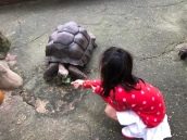 Feeding tortoise at Kuala Lumpur towers mini zoo
