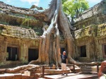 tips before you go Ta Prohm temple