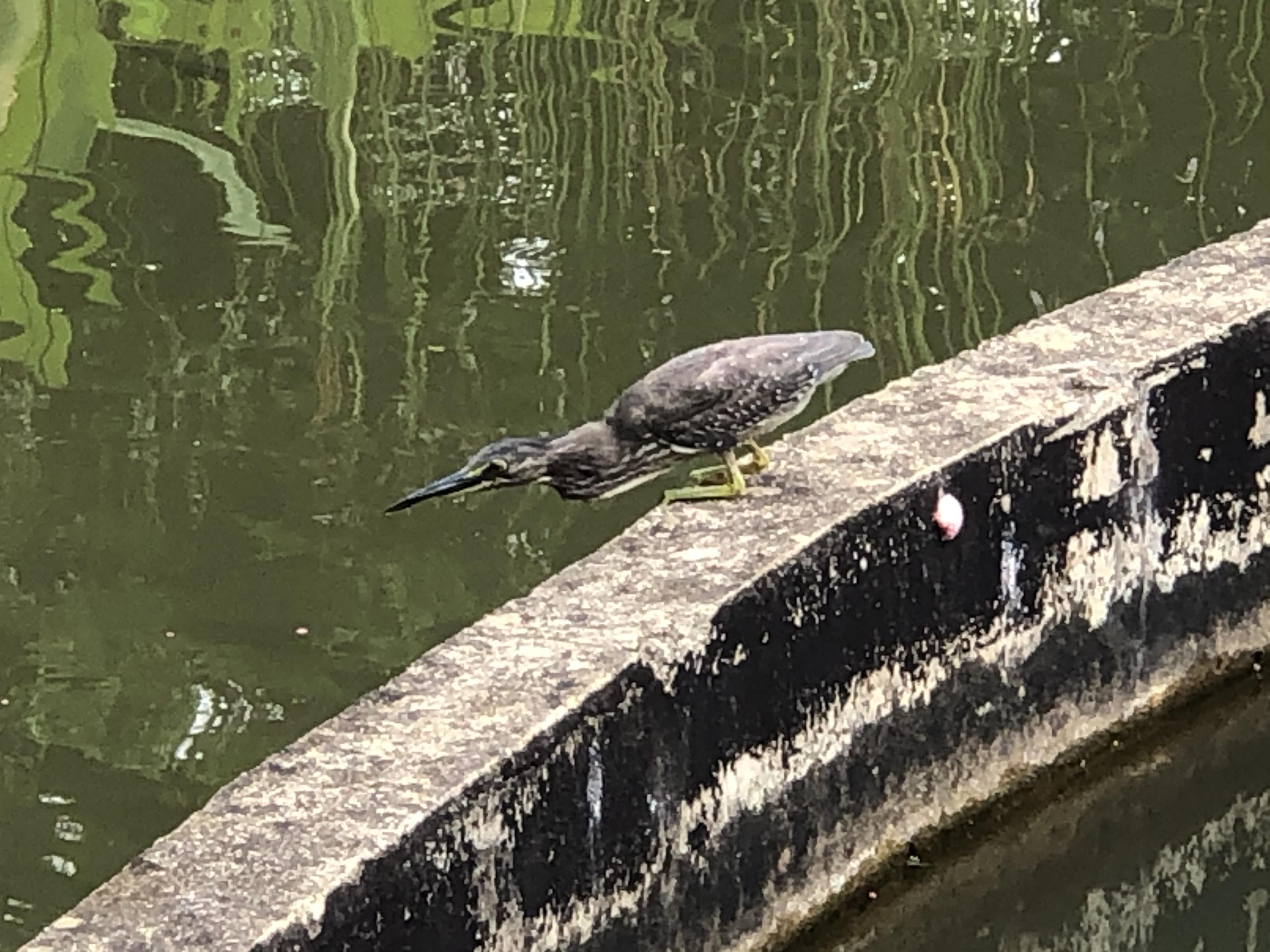 bird at Alexandra Canal Linear Park